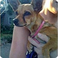 Adopt A Pet :: Bella - Vancouver, BC