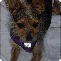 Adopt A Pet :: Duncan - Concord, CA