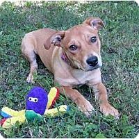 Adopt A Pet :: Rosey - Mocksville, NC