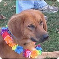 Adopt A Pet :: Delilah - Covington, KY