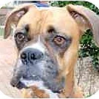 Adopt A Pet :: Daisy - Sunderland, MA