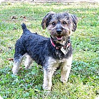 Adopt A Pet :: Jacques - Mocksville, NC