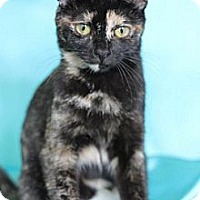 Adopt A Pet :: Shakira - Alexandria, VA