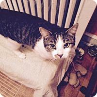 Adopt A Pet :: Nazz - Alexandria, VA