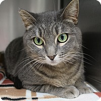 Adopt A Pet :: Tiger Lily - Newport Beach, CA