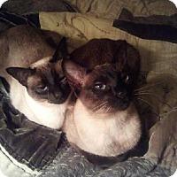 Adopt A Pet :: Salina+Foxy - Pinckney, MI