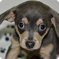 Adopt A Pet :: Houdini - Meridian, ID