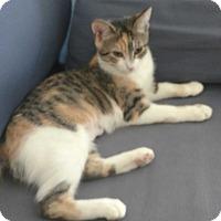Adopt A Pet :: Victoria - New York, NY