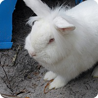 Adopt A Pet :: Leela - Williston, FL