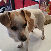 Adopt A Pet :: PENELOPY - TAHOKA, TX