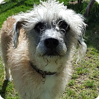 Adopt A Pet :: Annie - Family Friendly! - Bend, OR
