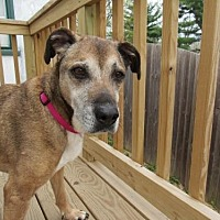 Hound (Unknown Type) Mix Dog for adoption in Gilbertsville, Pennsylvania - Babe - Senior