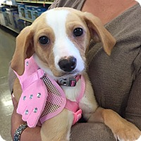 Adopt A Pet :: Betty - Brea, CA