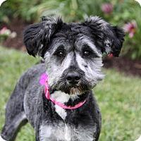 Adopt A Pet :: MCKENNA - Newport Beach, CA