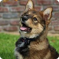 Adopt A Pet :: Aiden - San Diego, CA