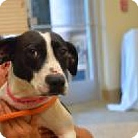Adopt A Pet :: Nymeria - Chattanooga, TN