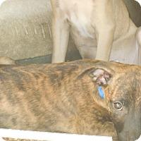 Adopt A Pet :: Hanna - Old Town, FL