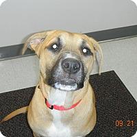 Adopt A Pet :: EMMA - Sandusky, OH
