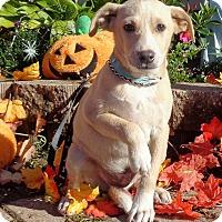 Adopt A Pet :: Conley - West Chicago, IL