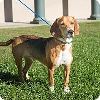 Adopt A Pet :: George - Folsom, LA