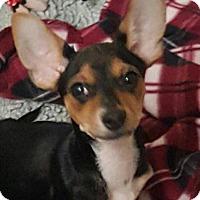 Adopt A Pet :: Monroe's SIrus - Las Vegas, NV