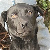 Adopt A Pet :: Wilmont - Germantown, MD