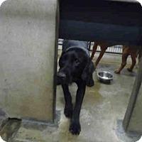 Adopt A Pet :: A571738 - Oroville, CA