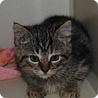 Adopt A Pet :: Sarah - Ridgeland, SC