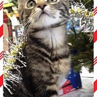 Adopt A Pet :: Riff Raff - Orange, CA