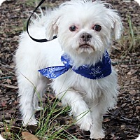 Adopt A Pet :: BARNEY - Jacksonville, FL