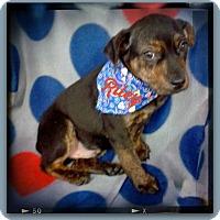 Adopt A Pet :: RILEY - Princeton, KY