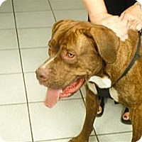 Adopt A Pet :: Hooch - Des Plaines, IL