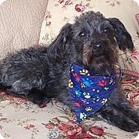 Adopt A Pet :: **Cesar** - Stockton, CA
