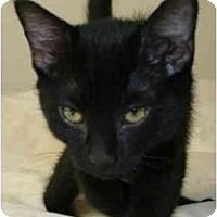 Adopt A Pet :: Eddie - Davis, CA