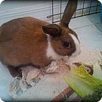 Adopt A Pet :: Tazzy - Williston, FL