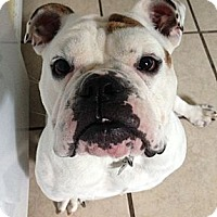 Adopt A Pet :: Louie - Strongsville, OH