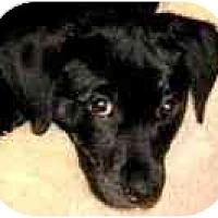 Adopt A Pet :: CHLOE - Wakefield, RI