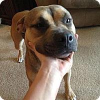 Adopt A Pet :: Turbo - Sacramento, CA