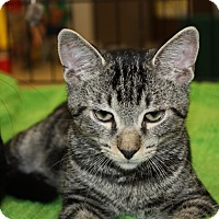 Adopt A Pet :: Docker (LE) - Little Falls, NJ
