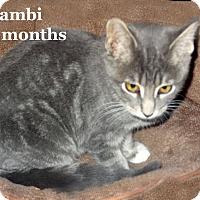 Adopt A Pet :: Bambi - Bentonville, AR