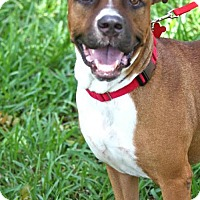 Adopt A Pet :: Earl - Miami, FL