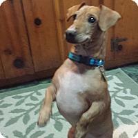 Adopt A Pet :: Olive - Marietta, GA