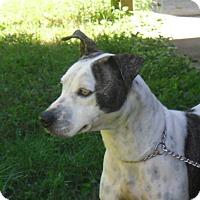 Adopt A Pet :: DOLLY - Odessa, FL