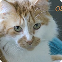 Adopt A Pet :: Oliver - Winter Haven, FL