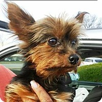 Adopt A Pet :: Nugget - Whiting, NJ