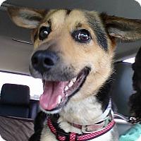 Adopt A Pet :: Clark - Lebanon, CT