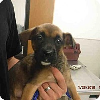 Adopt A Pet :: A566335 - Oroville, CA