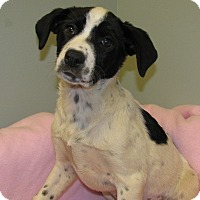 Adopt A Pet :: Bianca - Groton, MA