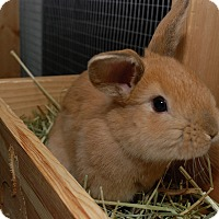 Adopt A Pet :: Bun Solo and Sky Hopper - Williston, FL