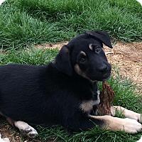 Adopt A Pet :: Marilyn Monroe - Dayton, OH